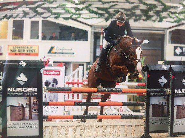GH Sporthorses 2
